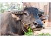 birmanie-20110414-181224
