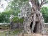 Angkor-20100823-051