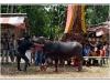 indonesie-20110509-130009