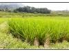 indonesie-20110510-131136
