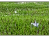 indonesie-20110511-153331