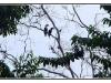 indonesie-20110516-014254