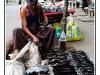 birmanie-20110404-152931