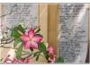 birmanie-20110406-101130