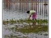 birmanie-20110406-173835