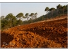 birmanie-20110416-070940