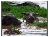 birmanie-20110417-145627