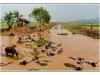 Buffles d'eau - Buffalos - Birmanie