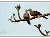 birmanie-20110423-155346