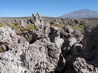 Rochas: arbres de pierre