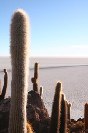 Depuis l'île Inca Huasi