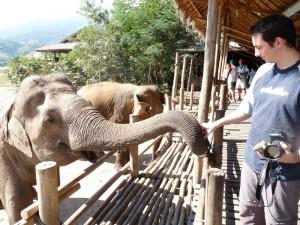 Nourrir les elephants